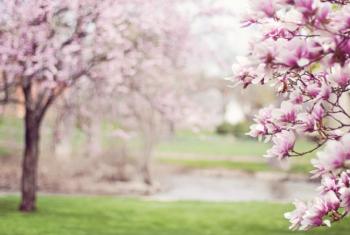 5 choses que j'aime au mois de Mai