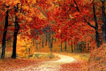 5 bonnes raisons d'aimer l'automne